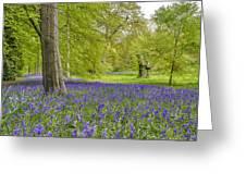 Woodland Walk In Blue Greeting Card