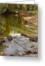 Woodland Water Greeting Card