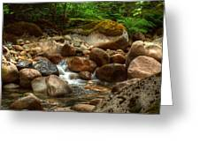 Woodland Waters Greeting Card