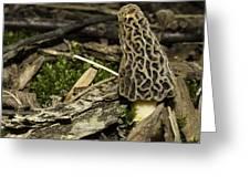 Woodland Yummy Greeting Card