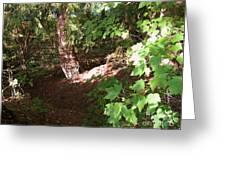 Woodlands Greeting Card