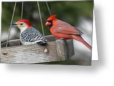 Woodpecker And Cardinal Greeting Card by John Kunze