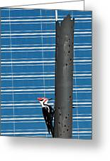 Woodpecker Column Greeting Card