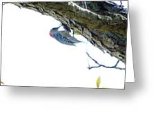 Woodpecker In A Tree Greeting Card by Marie Bulger