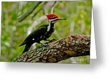 Woodpecker On A Limb Greeting Card
