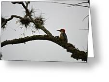Woodpecker On Lookout Greeting Card
