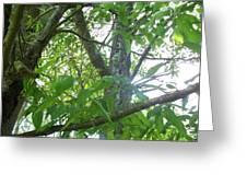 Woodpecker Tree Art Greeting Card