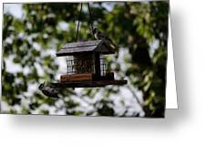 Woodpeckers At Dinner Greeting Card