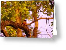 Woodpeckers Of Fort Simcoe Greeting Card