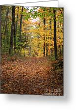 Woods 2 Greeting Card