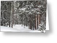 Woods In Winter Greeting Card