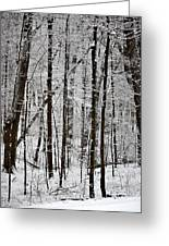 Woods On A Snowy Night Greeting Card by Penny Hunt