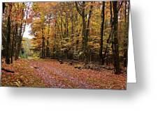 Woods Walk Greeting Card