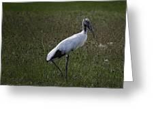 Woodstork In Field Greeting Card