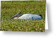 Woodstork Lazing In The Park Greeting Card