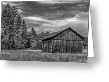 Woody    7d06977 Greeting Card
