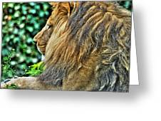 Woolly Mane Of The King   Greeting Card