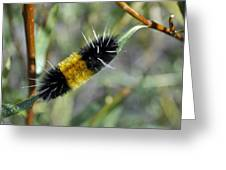 Woolly Worm In Yellowstone National Park Greeting Card