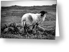 Wooly Goat Greeting Card