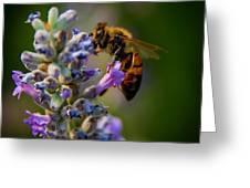 Worker Bee Greeting Card