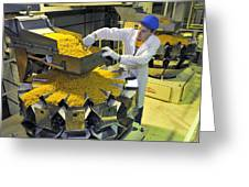 Worker With Pasta Packing Machine Greeting Card by Science Photo Library