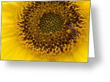 Working Honey Bee Greeting Card