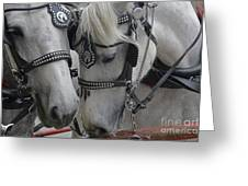 Working Horses Greeting Card