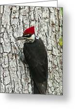 Working Woodpecker Greeting Card