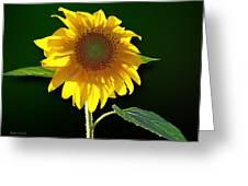 Worshipping The Sun Greeting Card