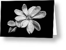 Wounded White Magnolia Wide Version Black And White Greeting Card