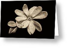 Wounded White Magnolia Wide Version Sepia Greeting Card