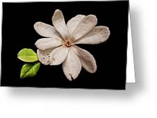 Wounded White Magnolia Wide Version Greeting Card