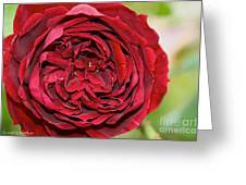 Wrapped Red Greeting Card