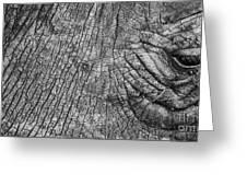 Wrinkly Rhino Greeting Card