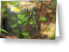 Writing Spider Greeting Card by Nelson Watkins