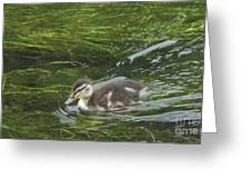 Wye Dale Duckling Greeting Card