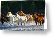 Wyoming Horses Greeting Card