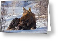 Wyoming Sunbathing Greeting Card