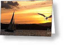 Yacht And Seagull Sunset Greeting Card