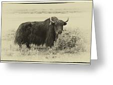 Yaks...the Official Animal Of Tibet Greeting Card