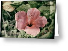 Yangru Greeting Card