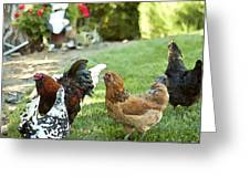 Yard Party With The Chickens Greeting Card