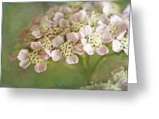Yarrow Greeting Card