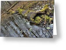 Ye Olde Mossy Log Greeting Card