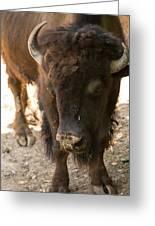 Waco Texas Buffalo Nose Drip Greeting Card