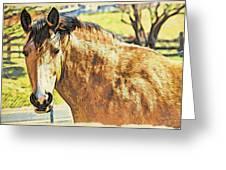 Yeller Horse Greeting Card