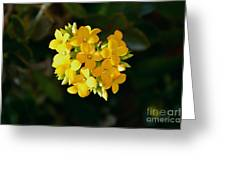 Yellow Allegria  Greeting Card