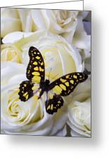 Yellow And Black Butterfly Greeting Card