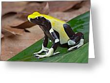Yellow And Black Poison Dart Frog Greeting Card