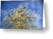Yellow And Blue - Blooming Tree In Spring Greeting Card